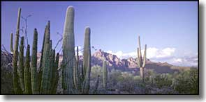 Organ Pipe Cactus National Monument