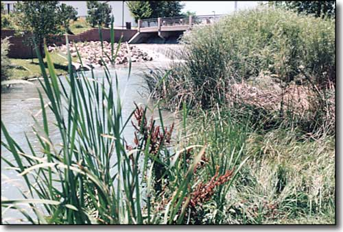 the riparian zone