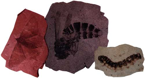Some of the fossils found at Florissant Fossil Beds National Monument
