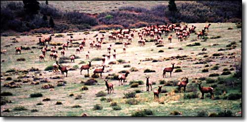 Hunting and fishing on colorado state trust lands state for Colorado fish and wildlife