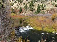Beaver pond in Cimarron Canyon