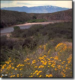 Bonita Creek in the Gila Box Riparian National Conservation Area