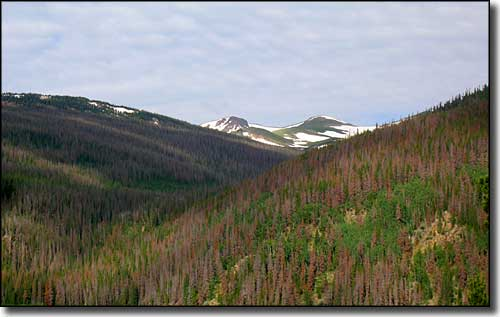 Rawah Wilderness lies along the eastern slopes of the Medicine Bow Mountains