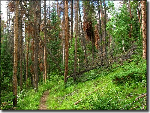 Typical trail scene in Arapaho-Roosevelt National Forest