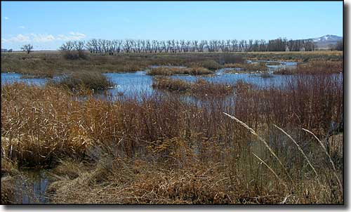 Typical wetlands area at Monte Vista National Wildlife Refuge