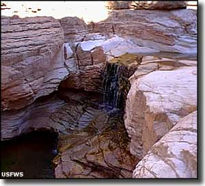 Cibola Falls at Sevilleta National Wildlife Refuge