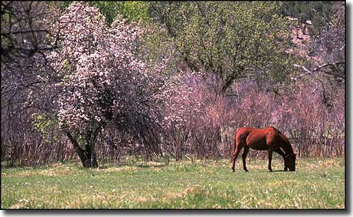 A horse grazing along the Billy the Kid Trail