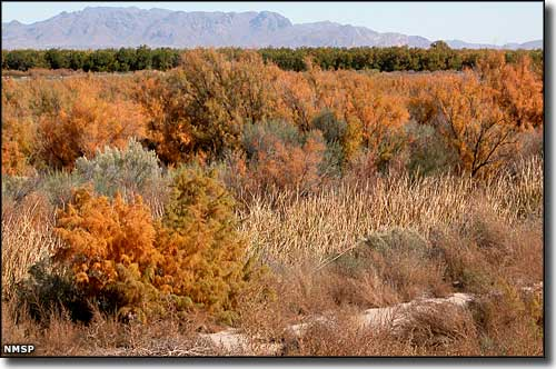 Mesilla Valley Bosque