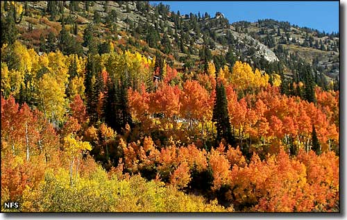 Autumn colors along the Little Cottonwood Canyon Scenic Byway