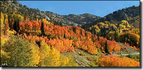 More fall colors along the Little Cottonwood Canyon Scenic Byway